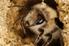 bee in underground hive