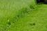 Lawn divot in mowed grass