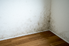 mold on the corner of a room
