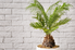 small palm tree in a pot