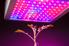 Grow light over a plant