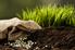 Soil on the ground.