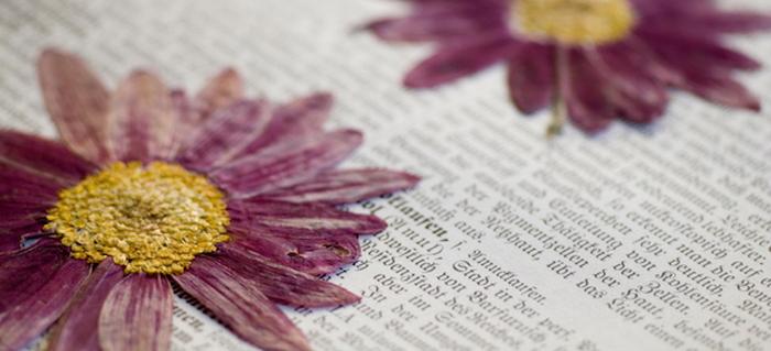 A beginners guide to pressing flowers doityourself mightylinksfo