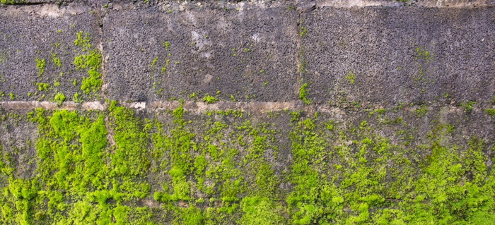 how to remove moss from concrete doityourself com