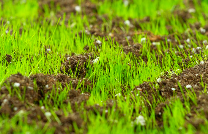 turf grass with fertilizer and compost