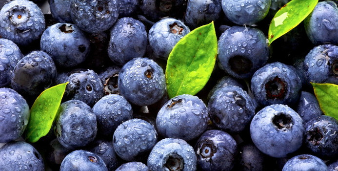 blue berries_000014287102_Small.jpg