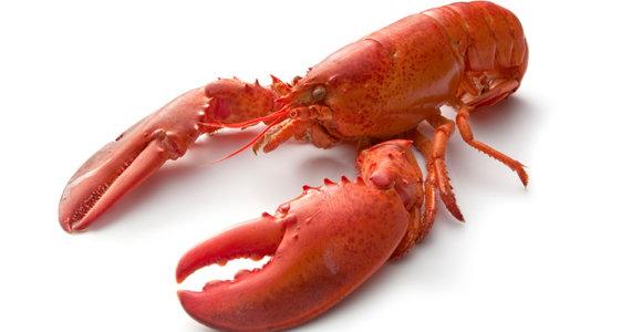 18_Lobster.jpg