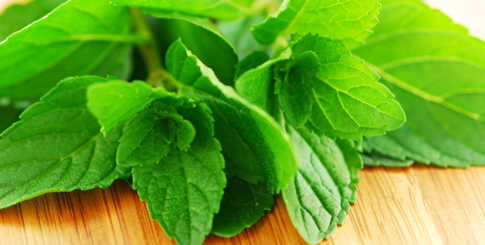 peppermint herb_000005199477_Small.jpg
