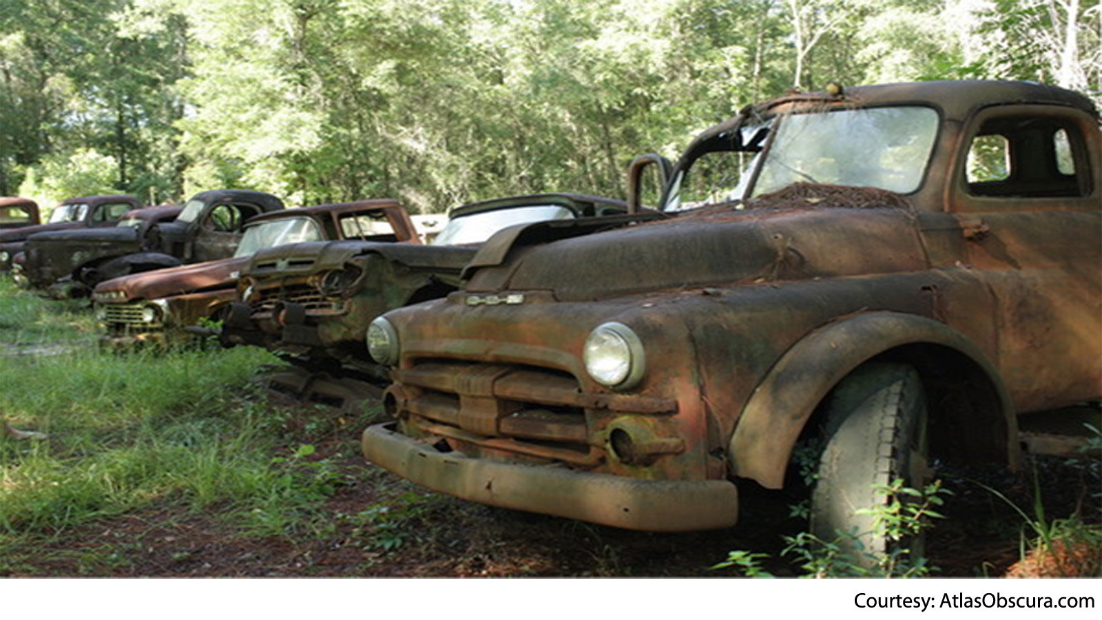 Finding Art in Rustic Ford Trucks