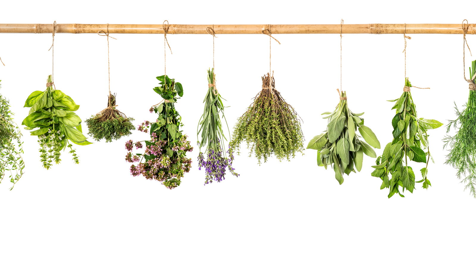 herbs hanging from stick