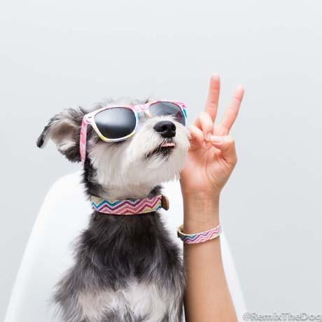 Remix-The-Dog-Friendship-Collar.jpg