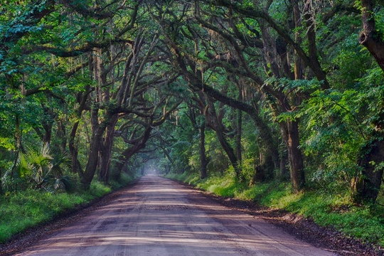 Tree-Tunnel_Teani-Parker_Sony-A6500.jpeg