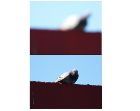 nikon P1000 Bird out of focus.png