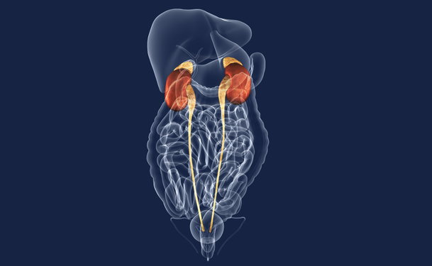 What Is The Urinary System
