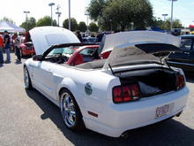 NEW MUSTANG PIC 06