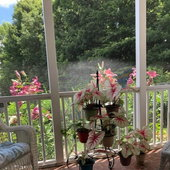 Caladiums and lilies