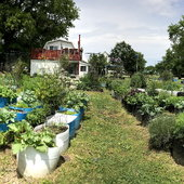 This is a panoramic view of our container garden just as Spring is getting underway.