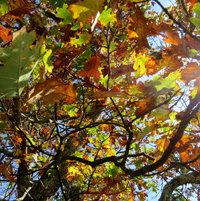 Colors - Shapes - Sunshine = North Carolina US beauty !