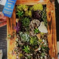 My first attempt at a succulent arrangement won 1st place.