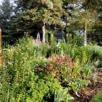 Back border of 100 footlong garden