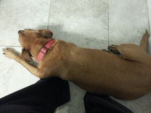 Laying on my feet.