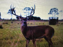 3rd largest registered buck in Florida last year.