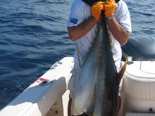 jeff with 200 lbs big eye tuna caught se corner of veatch 9/7/09 at 11:00am. 1 1/2 hour fight