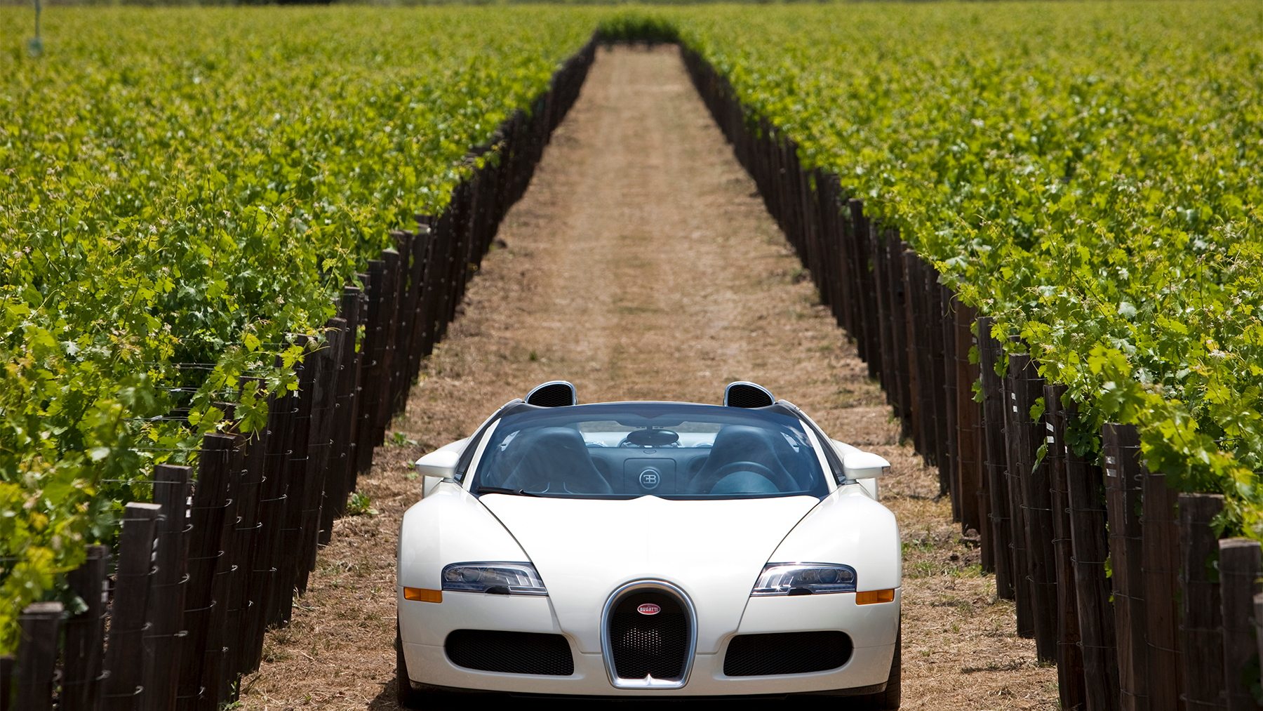 bugatti veyron grand sport napa valley 014