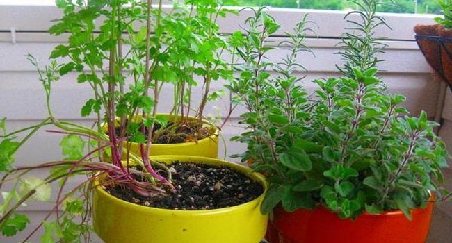 2nd floor balcony...flower and herb mini-garden