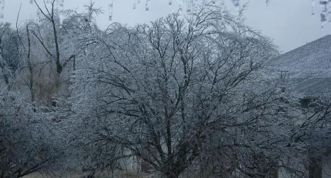 tree that survives all seasons